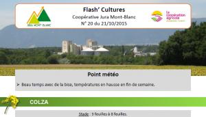 FlashCultures